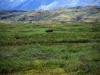Park Narodowy Denali, 18 VI 2008