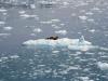 Park Narodowy Kenai Fjords w południowej Alasce, 21 VI 2008