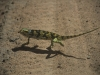 Kameleon, Kenia II 2012