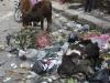 Thamel, Katmandu 11 IV 2012